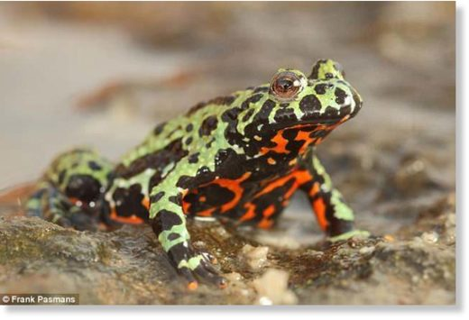 The findings that a fungis affecting frogs originated in Korea offer 'strong evidence for a ban on trade in amphibians from Asia, due to the high risk associated with exporting previously unknown strains of chytrid out of this region,' the study said