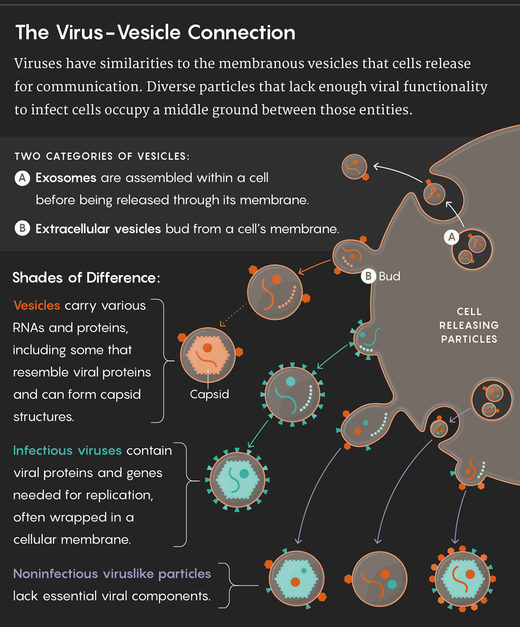 virus vesicle connection