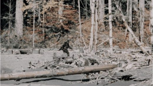 Bigfoot: The 10 most convincing sightings?