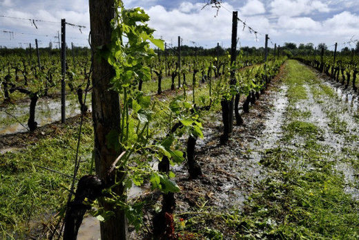 bordeaux vineyard hail