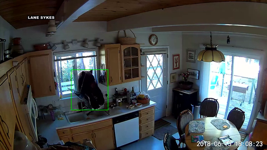 'Good morning! Got any honey?' Bear breaks into California home through window