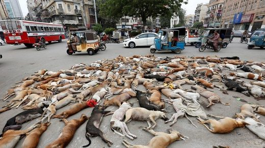 The carcasses of dead dogs Karachi 2016.