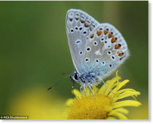 Butterfly numbers in the UK are in decline