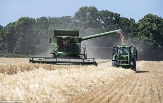 A harvester at the farm in Ringwood which began harvesting its arable land as early as June 28