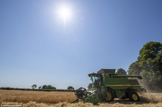 They began harvesting their 750 acres of arable land on June 28, two weeks earlier than normal