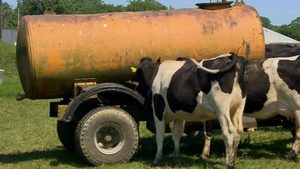 Farmers have brought in emergency water tankers