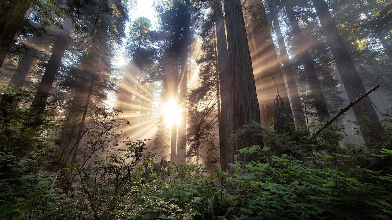Mysterious disappearances in Humboldt County, California