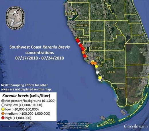 red tide gulf mexico