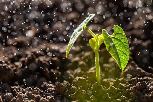 Petrichor main ingredients plants and bacteria