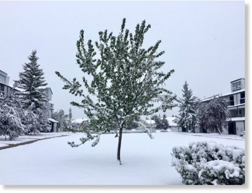Snow accumulates in Grande Prairie as snowfall warnings were issued on Wednesday, Sept. 12, 2018 for much of northern Alberta