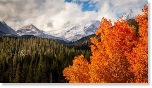 Fall foliage in the foreground, snow-capped peaks in the back... This is happening, as of the first weekend of October 2018, in the Eastern Sierra.