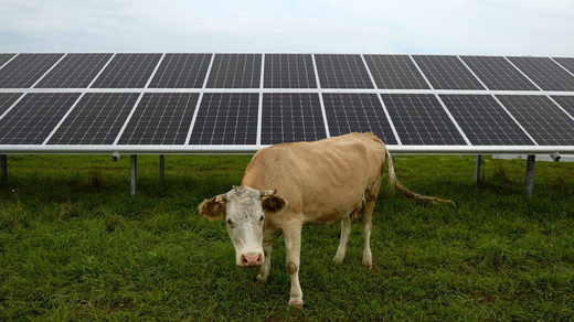 Solar panel and cow
