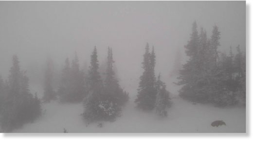 Glacier National Park webcam photo