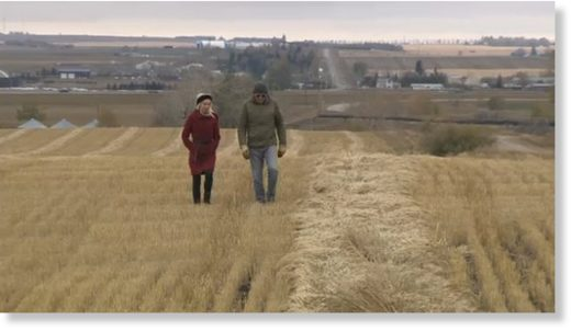 Tony Marshall tours CTV's Alesia Fieldberg through his field of wheat near Aldersyde as he awaits an opportunity to finish harvesting