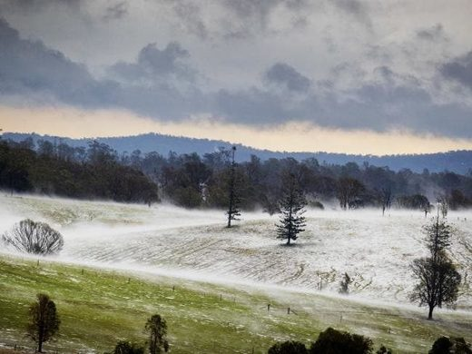 Greenfields resembled snowfields at Long Flat south of Gympie