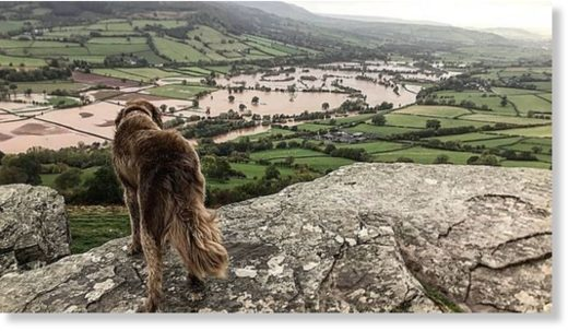 North the dog overlooks Crickhowell in Powys as the River Usk burst its banks