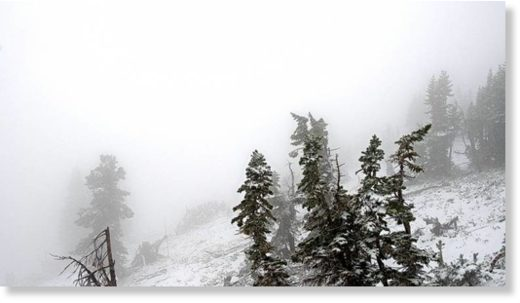 Summer snow was showing up on the Cody Bowl cam at Jackson Hole