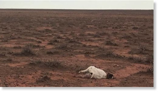 Hundreds of animals, including goats and kangaroos, were killed by hail in far-west NSW.