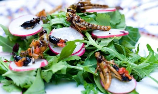 Social engineering: Rebranding edible insects from 'planet-saving' to trendy
