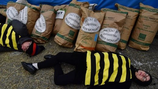 bee protester against monsanto