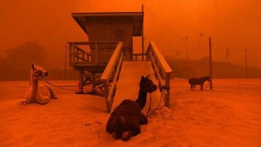 livestock california wildfires 2018
