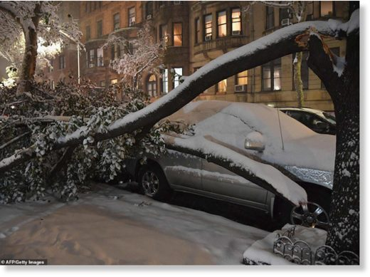 A tree collapsed on top of a parked car in Manhattan on November 15, 2018 in New York