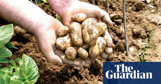 Harsh harvest could mean a Canada-wide potato shortage