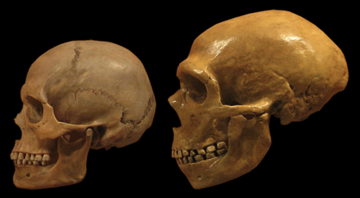 Human and Neanderthal
