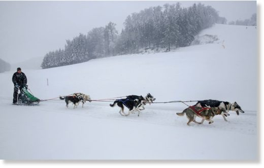 Musher Michael Ruopp is pulled by his huskies as he rides on a field near Lichtenstein, Germany, Sunday, Jan.6, 2019.