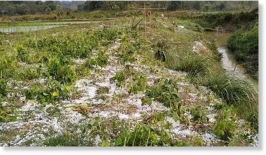 A cropland lies ravaged at a field of Sijakmukh village in Saroatoli union of Baghaichhari upazila under Rangamati hill district after a hailstorm lashed the area yesterday.