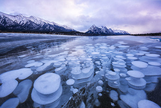 Frozen methane bubbles in Abraham Lake, Alberta, Canada