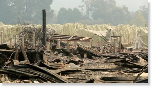 Jinks Creek Winery in Tonimbuk was destroyed