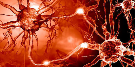 neurons DHA conducts electricity