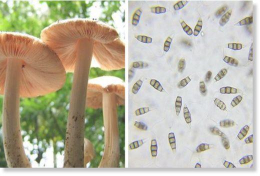 plastic eating mushroom