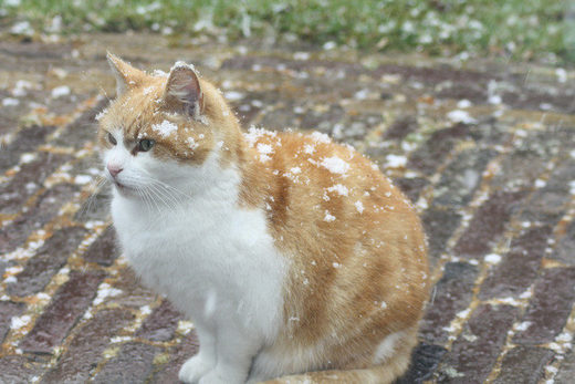 cat snow netherlands