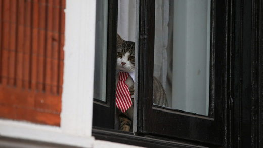 Embassy Cat Assange