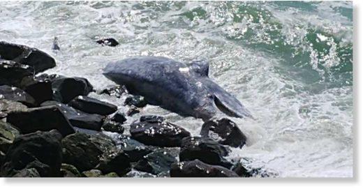 esplanade_whale.jpg