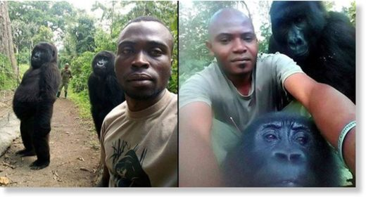 Gorillas Pose With Anti Poaching Rangers