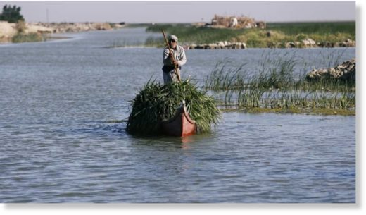 An Iraqi Marsh Arab paddles his boat as he collects reeds at the Chebayesh marsh in Dhi Qar province, Iraq, April 14.