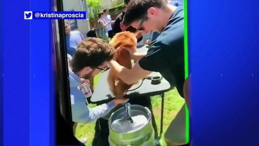 dog_drinks_from_keg_video_vid.jpg