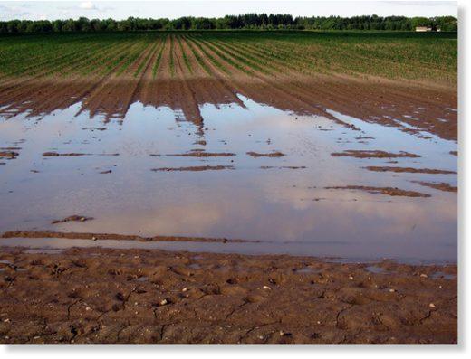 Wet_Field_Public_Domain.jpg