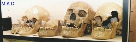 Skulls at Humboldt museum