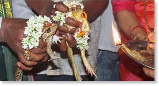 frog marriage