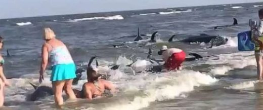 47 pilot whales strand themselves on St. Simon Island, Georgia - 3 die
