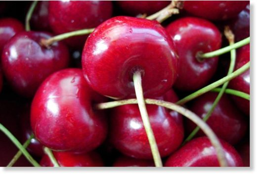 Growers say continuous rain and hail is making it hard to protect cherry crop