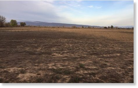 A field of alfalfa in the Klein-Karoo devastated