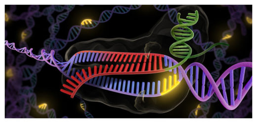 CRISPR - revolutionary new tool to cut and splice DNA