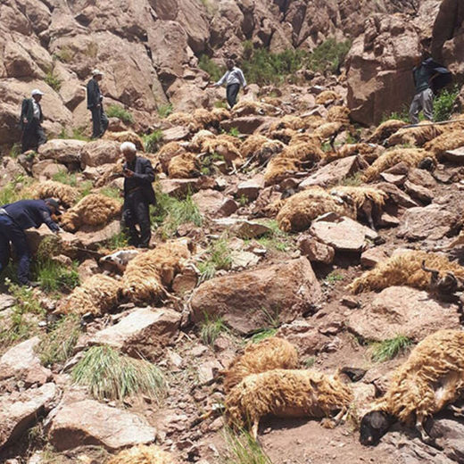 sheep mass animal die-off Turkey