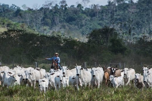 cattle farm brazil