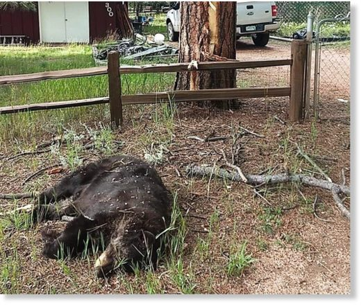 Lightning kills bear in tree